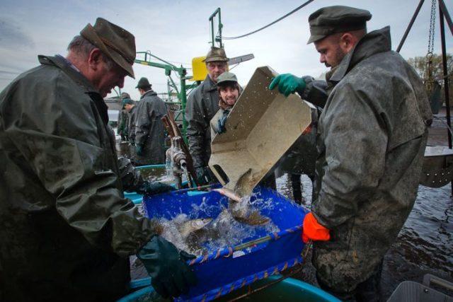 Ловля рыбы в Чехии